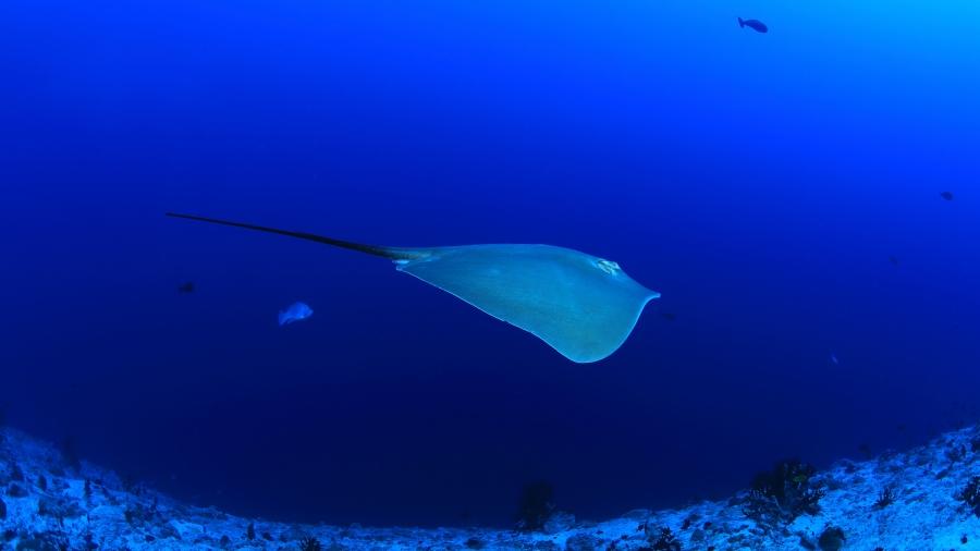 海洋占地球的面积高达七成,有各种奇特的事情在海里发生,海底有许多未知世界,人类一直想一探究竟,可海洋始终深不可测。