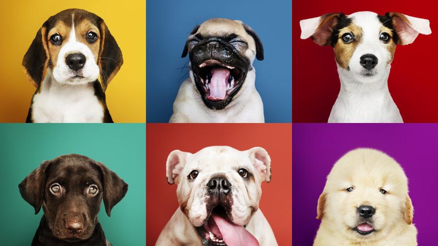 紀曉嵐寫的因果故事,狗比人忠心。