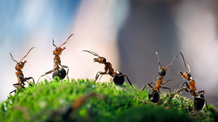 螞蟻看不到人類,不相信人類存在,人類的「無神論」也是同理嗎?