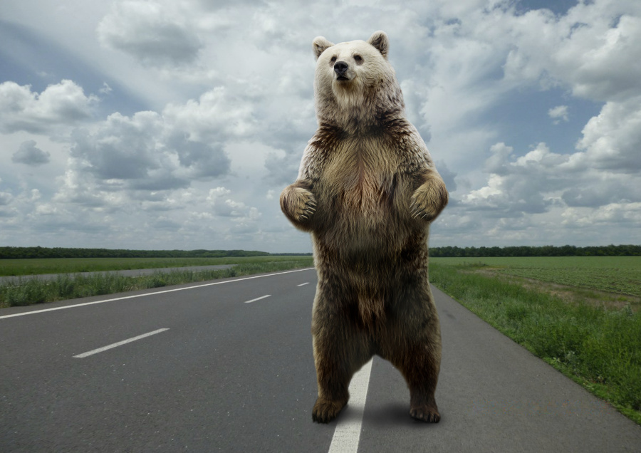熊是杂食性动物,什么都吃。