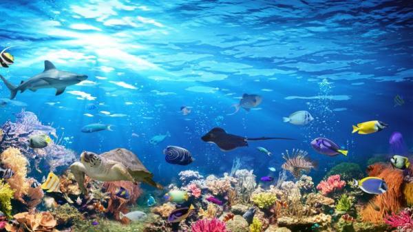 地球上最黑的魚 能吸收99.5%光線