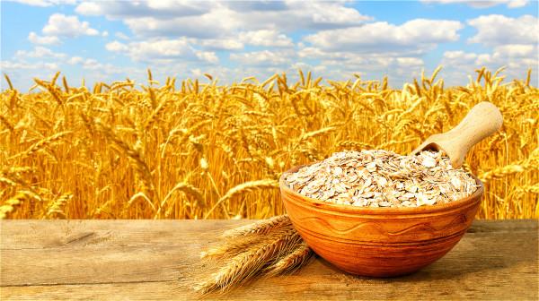 穀物雜糧類的食物含有多種的營養素,像是維生素B群、膳食纖維與植化素等。