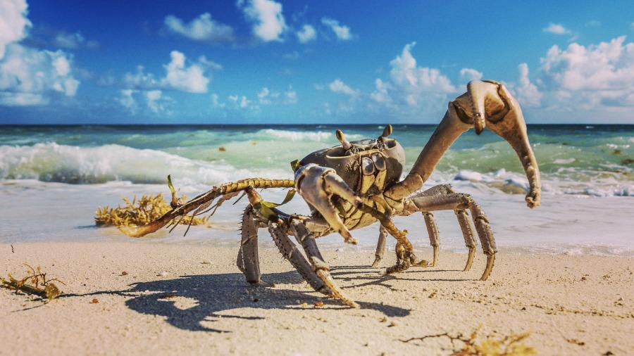 爸爸開心教女兒拿螃蟹,結果一放手悲劇就發生!