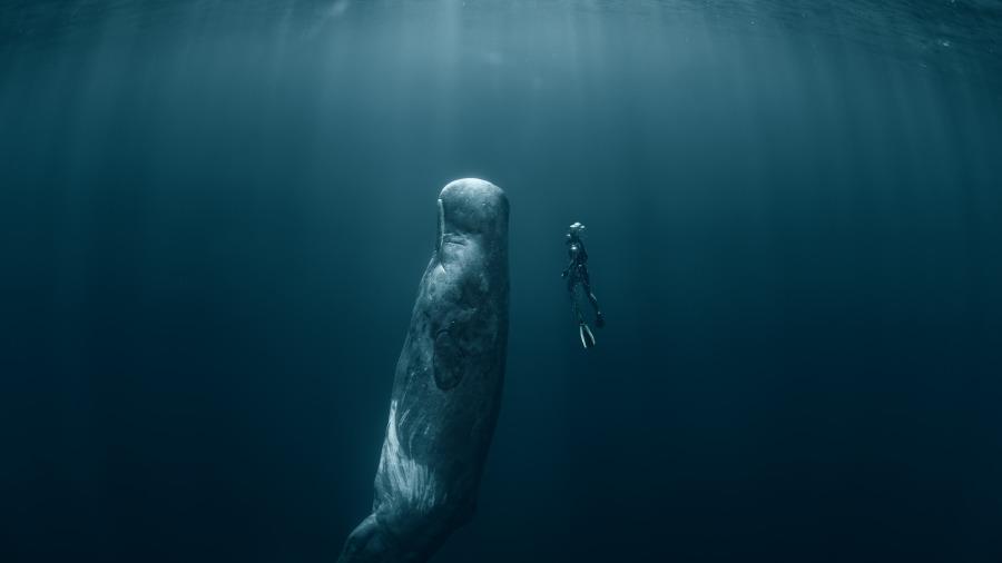 鯨魚是哺乳類,不呼吸怎麼在海裡睡覺呢?